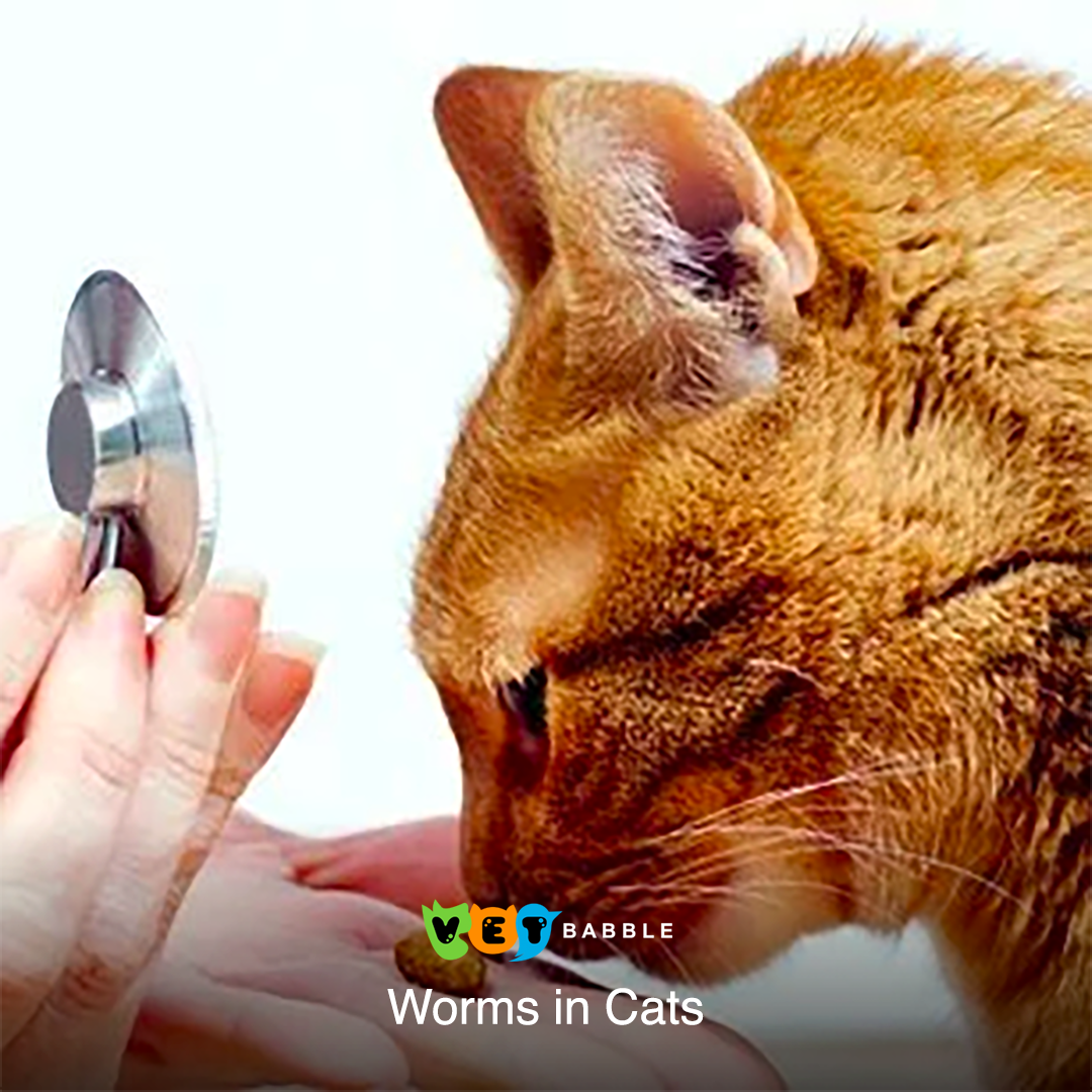 Worms in Cats Cat symptoms, Cats, Cat health