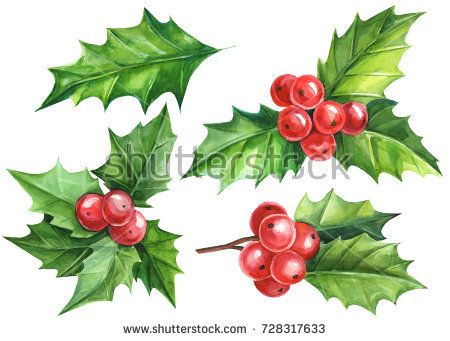 Christmas and New Year symbol decorative elements  Holly berry set     Christmas and New Year symbol decorative elements  Holly berry set   Watercolor colorful floral