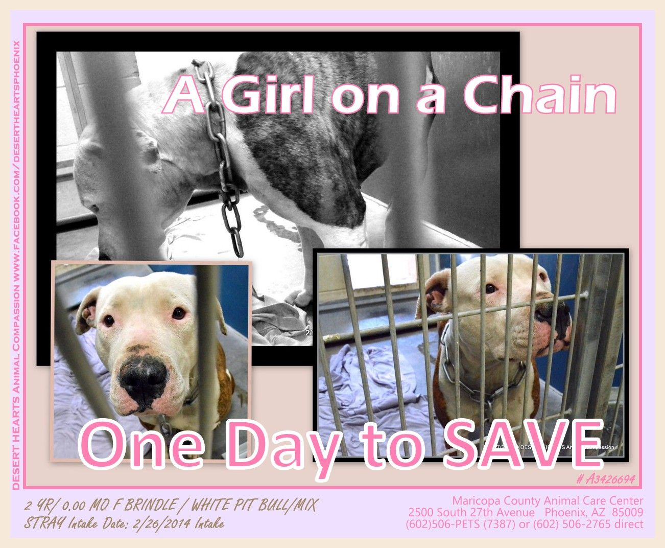 Pin by Pam Pentico on Rescue Me! Disabled dog, Adoption