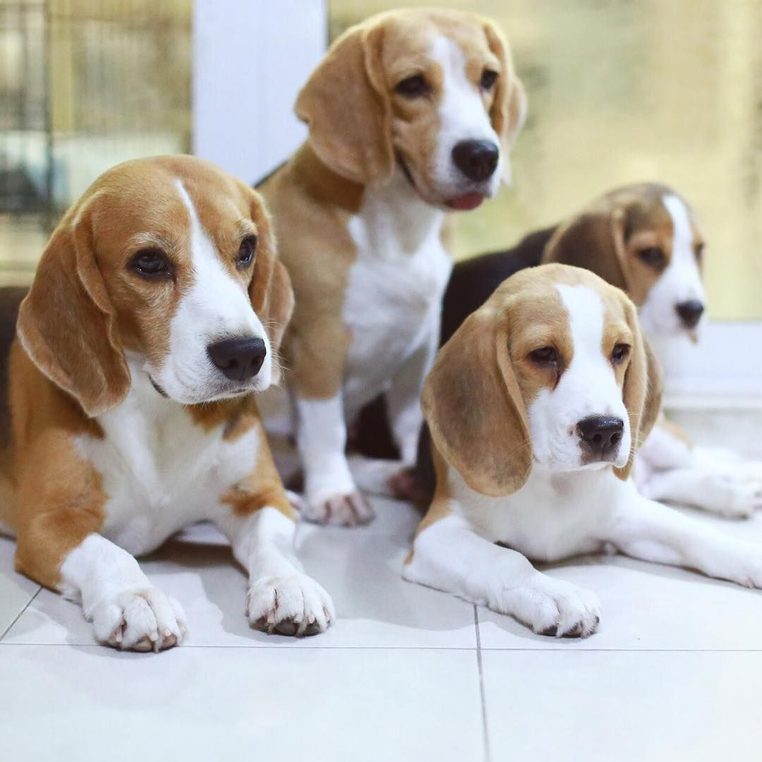 Thank You For Being A Part Of My Life Beagle Breeds Beagle Dog