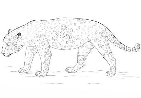 Jaguar Coloring page | Animal coloring pages | Pinterest