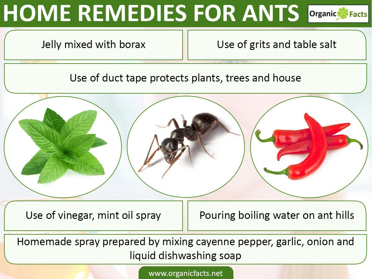 Home remedies for ants include boiling water, duct tape