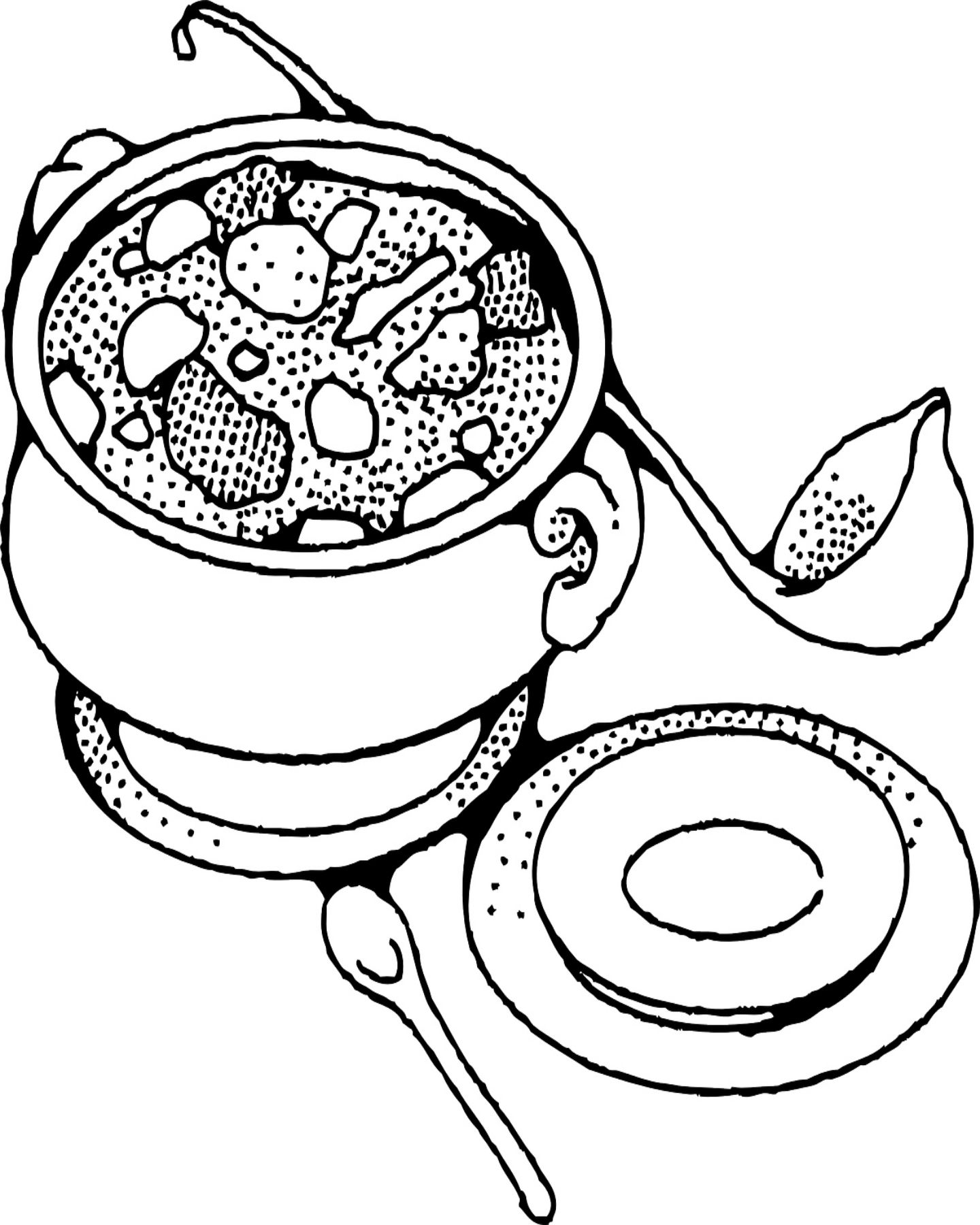 Free Printable Soup Coloring Page With Images