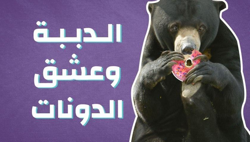 الدببة وعشق الدونات Black Bear Animals Bear