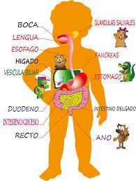 Resultado De Imagen De E Infantil Aparato Digestivo El Cuerpo