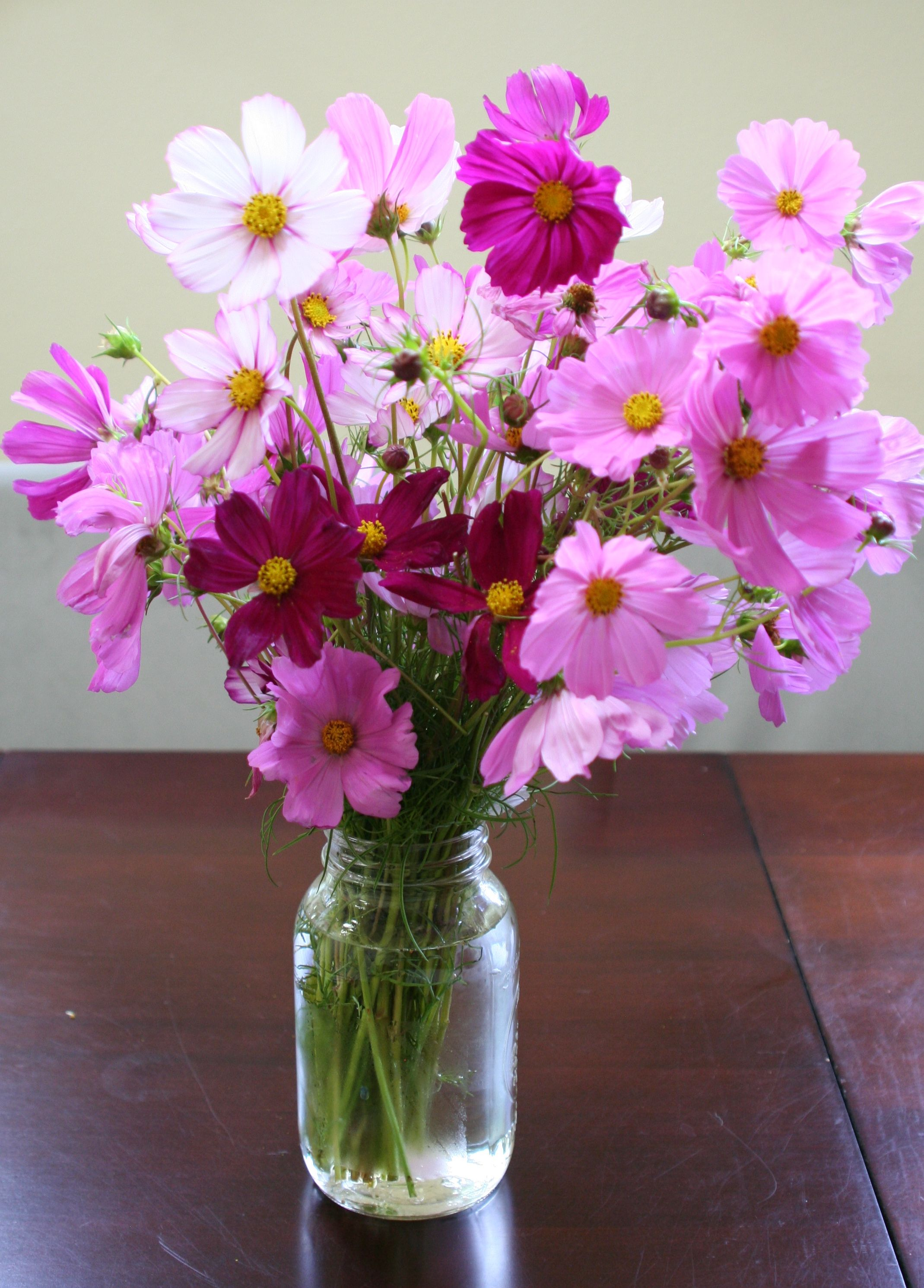 cosmos flower bouquet - Google Search | inspiration from nature ...