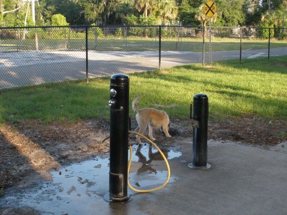 Pic Of Wash Station Dog Park Doggy Dogs