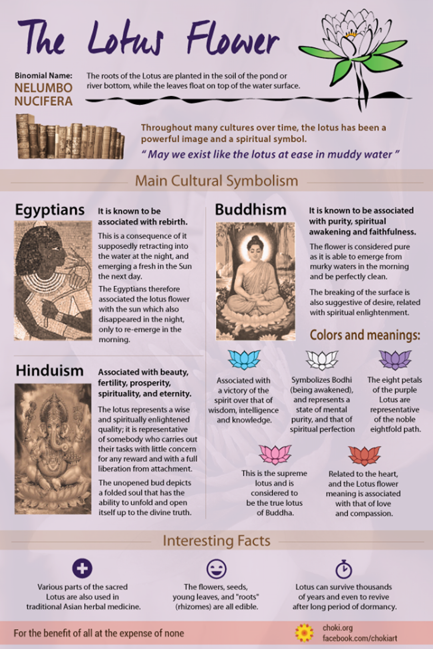 Interesting Facts About The Lotus Flower Infographic Ancient
