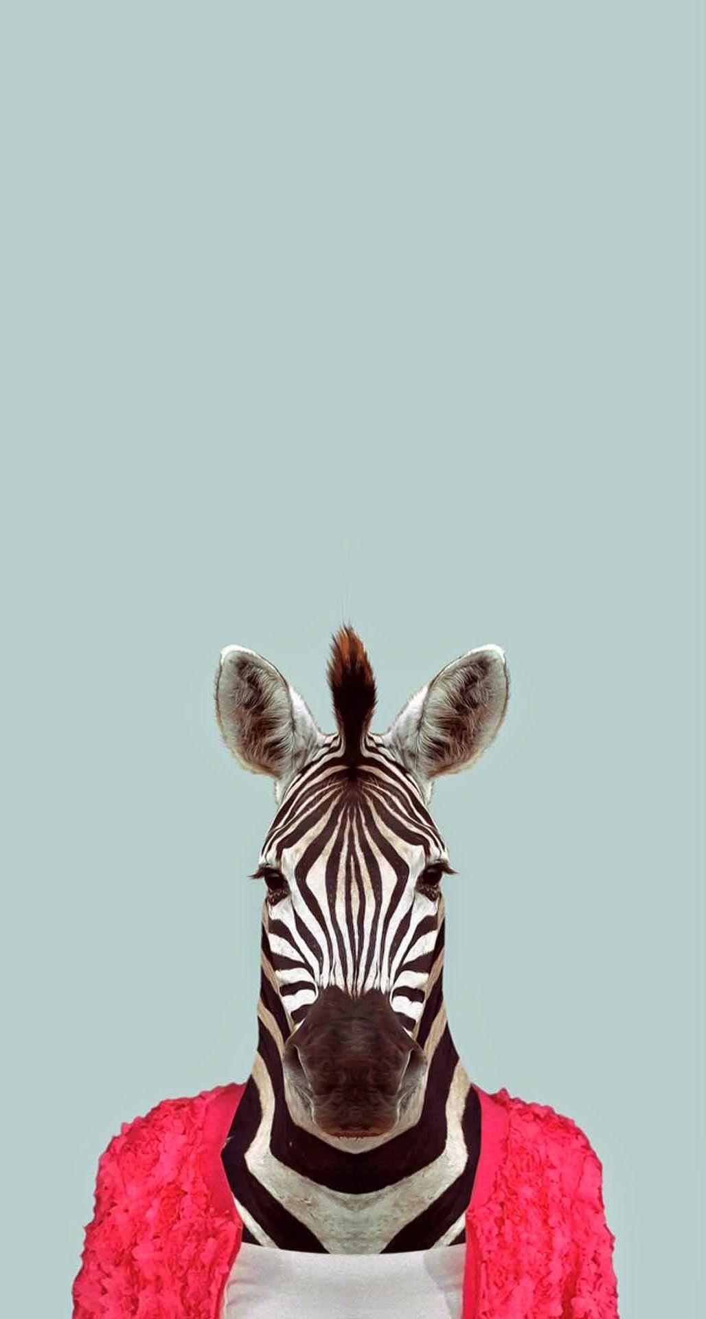 Zebra Funny Animal Portrait Iphone 6 Plus Hd Wallpaper Pet Portraits Animal Wallpaper Zebras