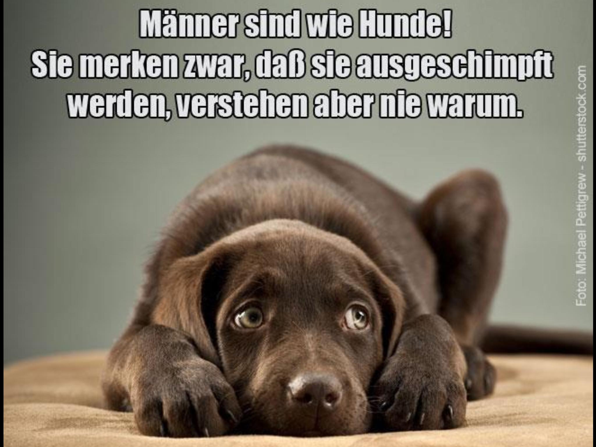 Pin von ilse mertens auf Hunde und Katzen | Hunde sprache ...