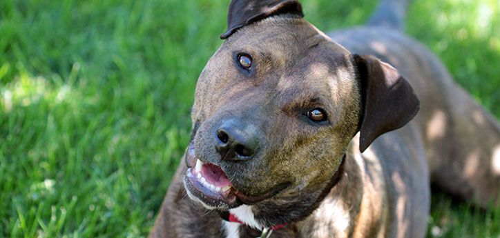 Dogliability insurance best friends animal society