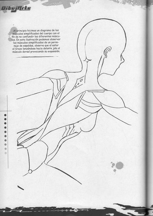 3 DibujArte Tomo - Musculos_pagenumber.071