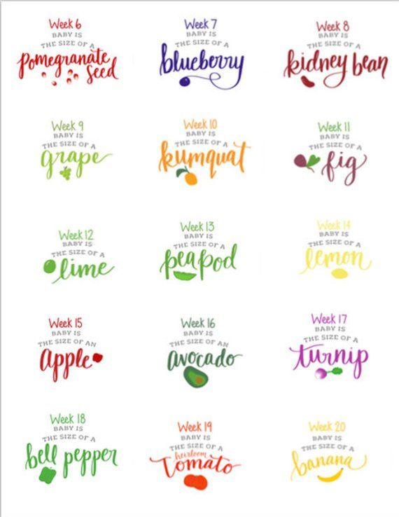 Printable Pregnancy Week By Signs Corresponding Fruits And Veggies Fruit Chart P