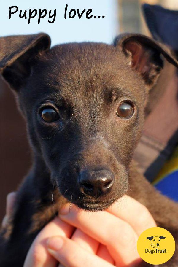 Judges Mention Puppies Category Guoda Kavaliauskaite Lithuania Dog Photograph Dog Beach Dogs