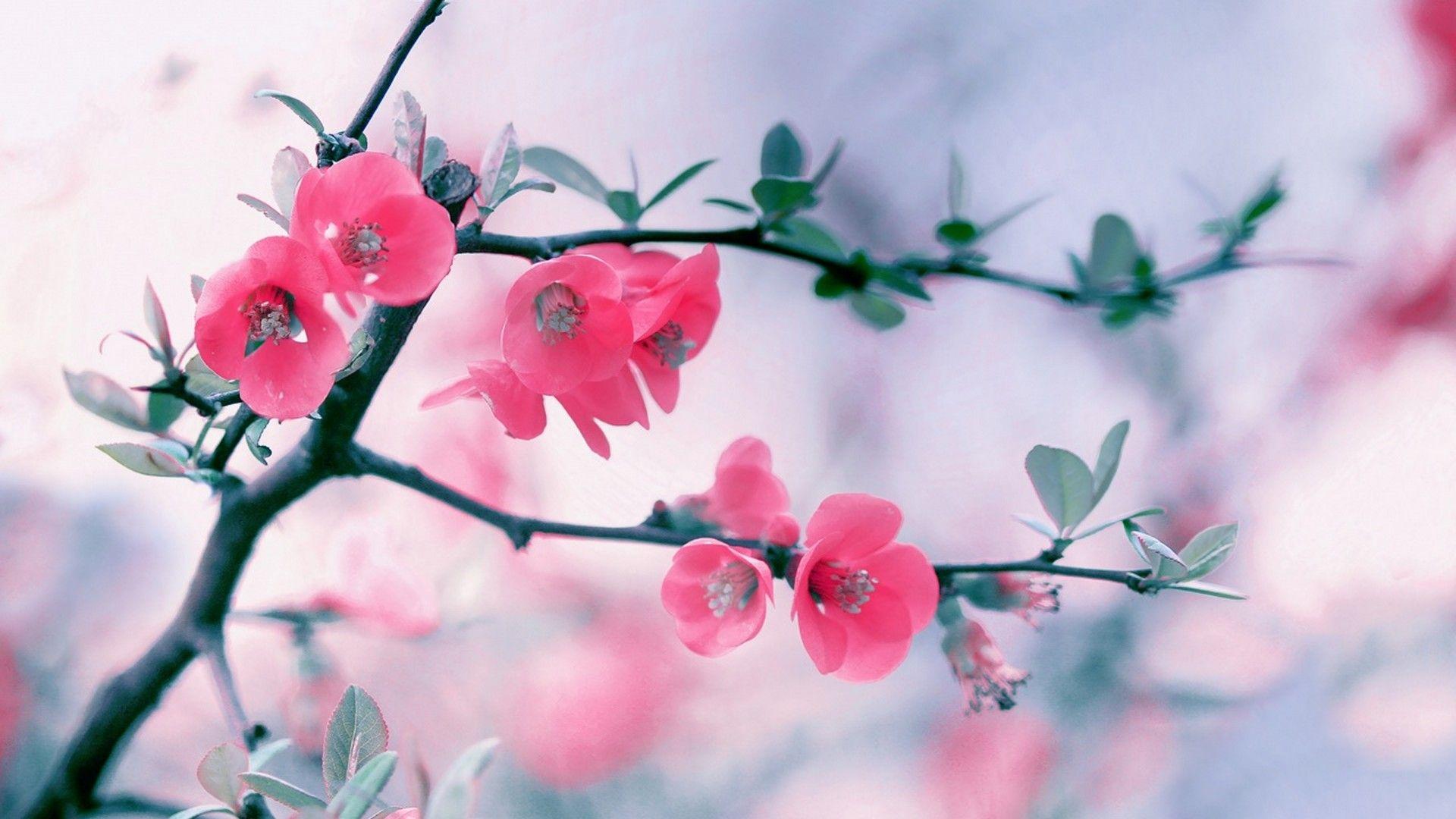 Cute Spring Wallpaper Hd 2021 Live Wallpaper Hd Spring Wallpaper Flower Wallpaper Flower Backgrounds