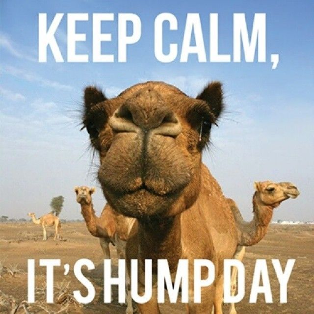 Happy Hump Day! Remember Wednesday is one day closer to the weekend! |  Funny wednesday memes, Funny hump day memes, Wednesday hump day