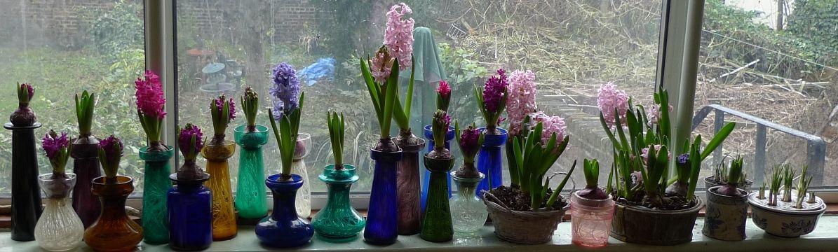 Bulb Forcing Vases Window Treatment Pinterest