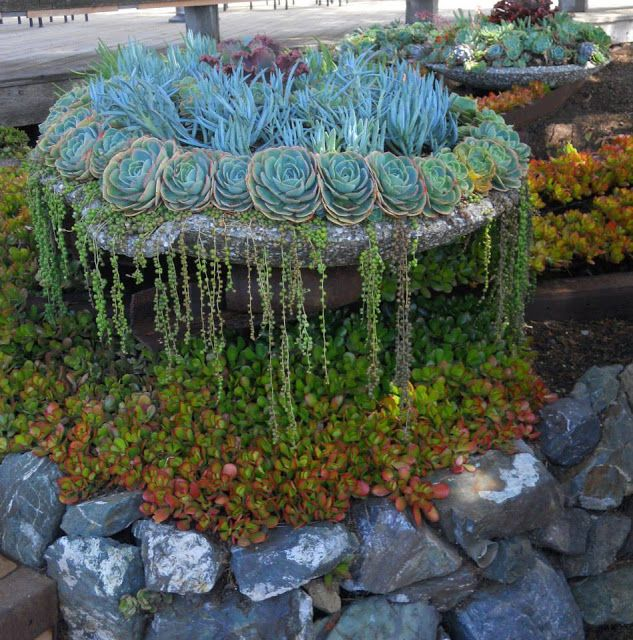 Gorgeous succulent container; looks like a waterfall cascading down gardening (jardineria  ~ 03164802_Sukkulenten Hauswurz Unterschied