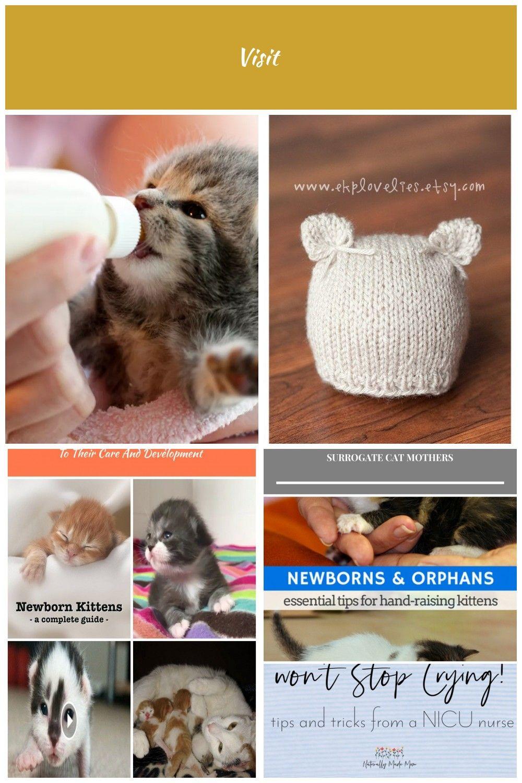 Kitten Formula Recipes And How To Bottle Feed A Newborn Kitten Newborn Kittens Newborn Kittens Kitten Formula Raising Kittens