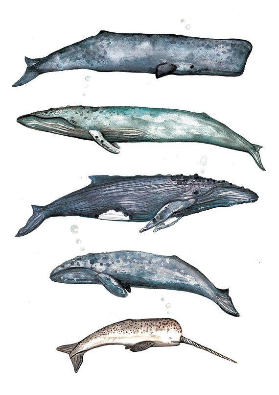 Ähnliche Artikel wie Wal Sammlung Aquarell Illustration Home Dekor Wand-Art Giclée auf Etsy