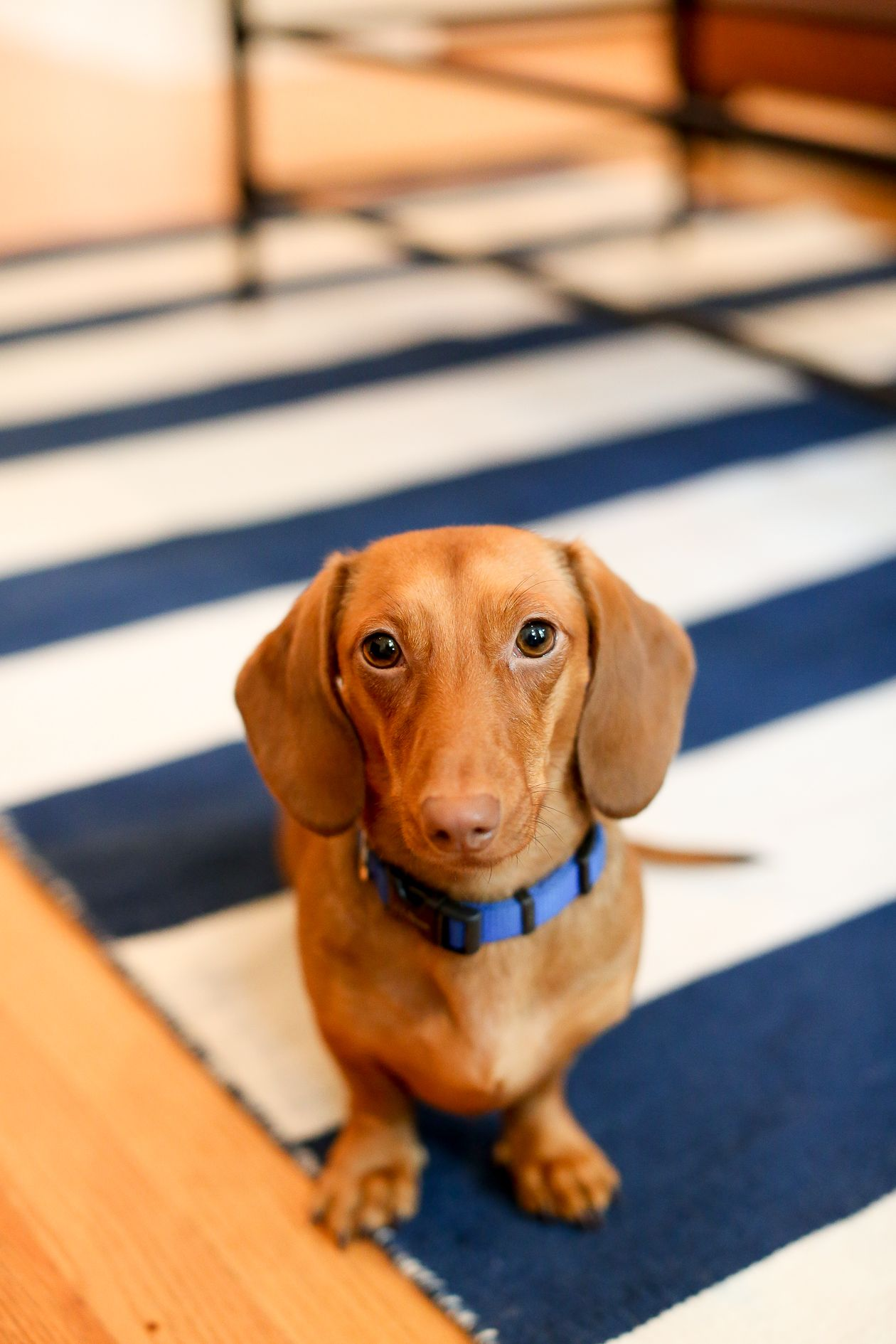 Bringing Home Baby Tips For Hosting Visitors Baby Dachshund
