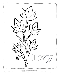 Image Result For Ivy Leaves Drawing Leaf Coloring Page Pages Printable
