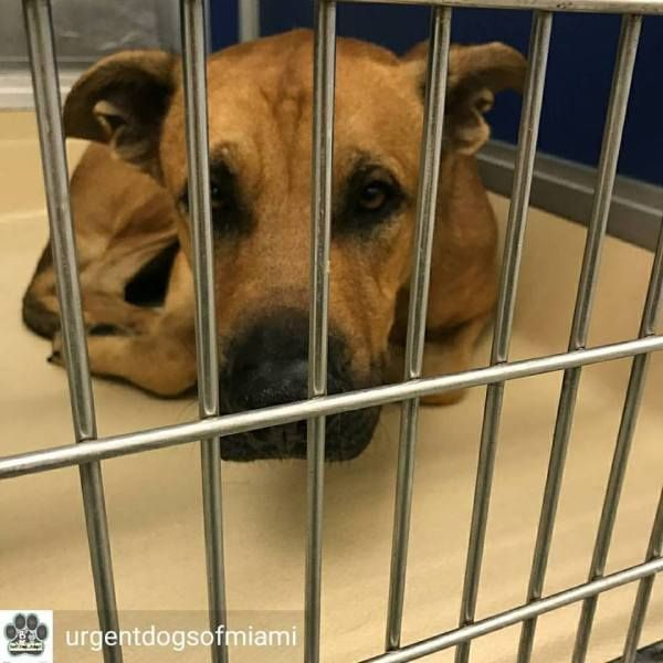 Dog S Cries Of Sadness Longing For Help Out Of Overcrowded Miami Shelter Dog Crying Animal Rescue Beloved Dog