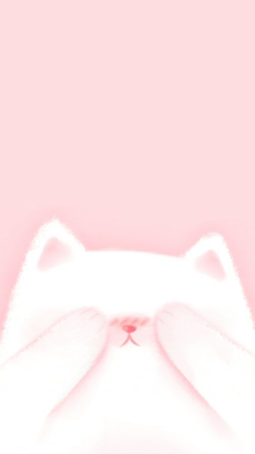 Cat Pink And Wallpaper Image