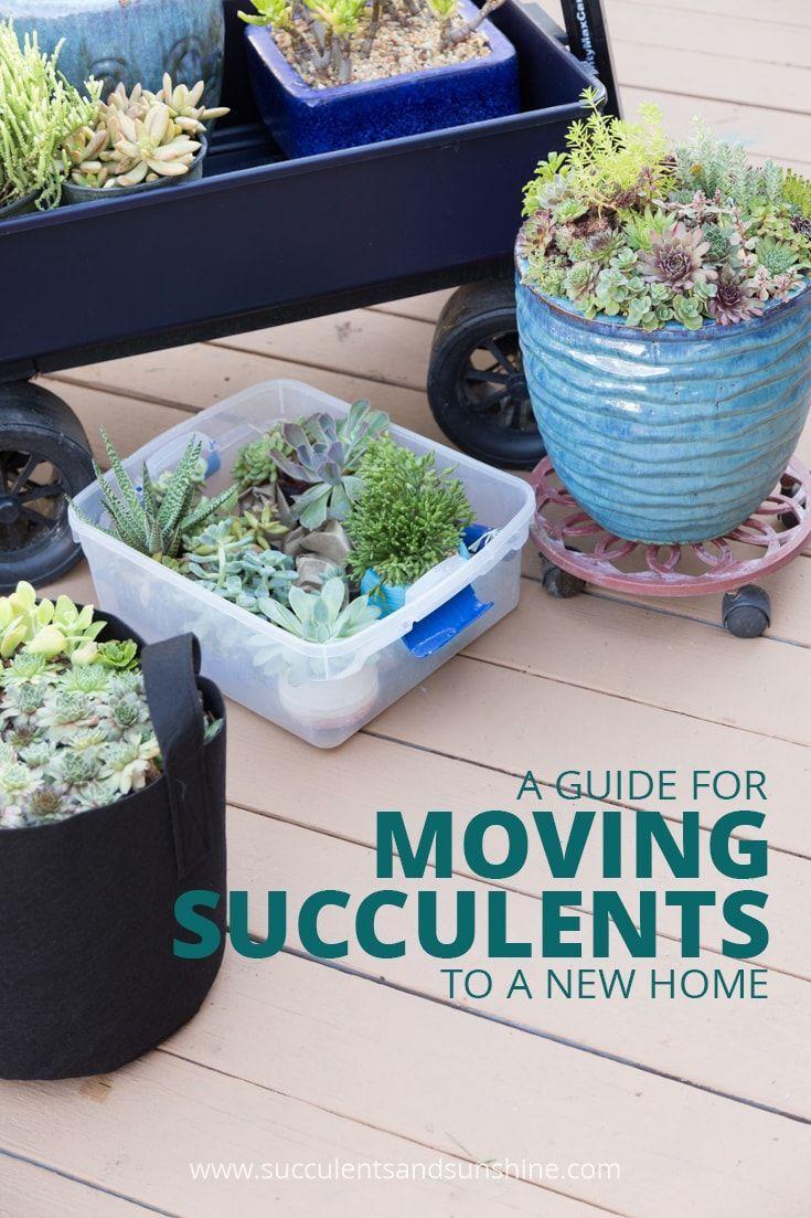 How to move succulents long distances succulent