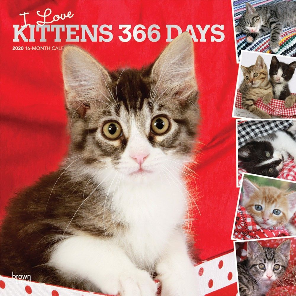 If You Re A Kitten Lover Treat Yourself To A Year S Worth Of Cute Photos Of These Sweet Balls Of Fur I Love Kit Kitten Photos Cats And Kittens Kitten Cuddle