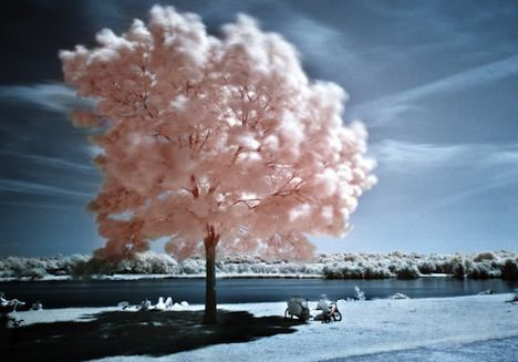 Trees Photographed in Infrared [PICS]