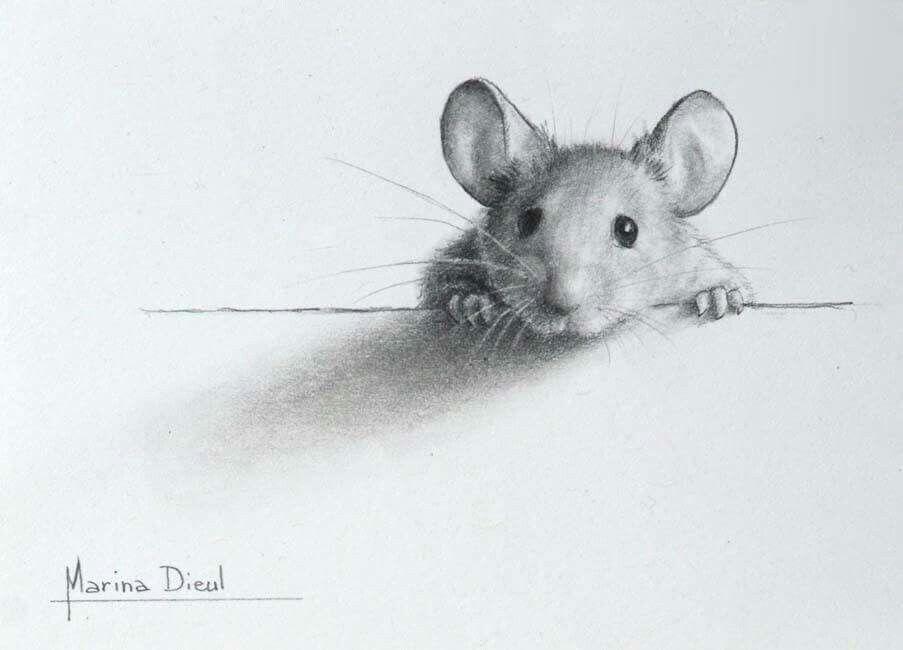 Марта, рисунки мышек прикольные