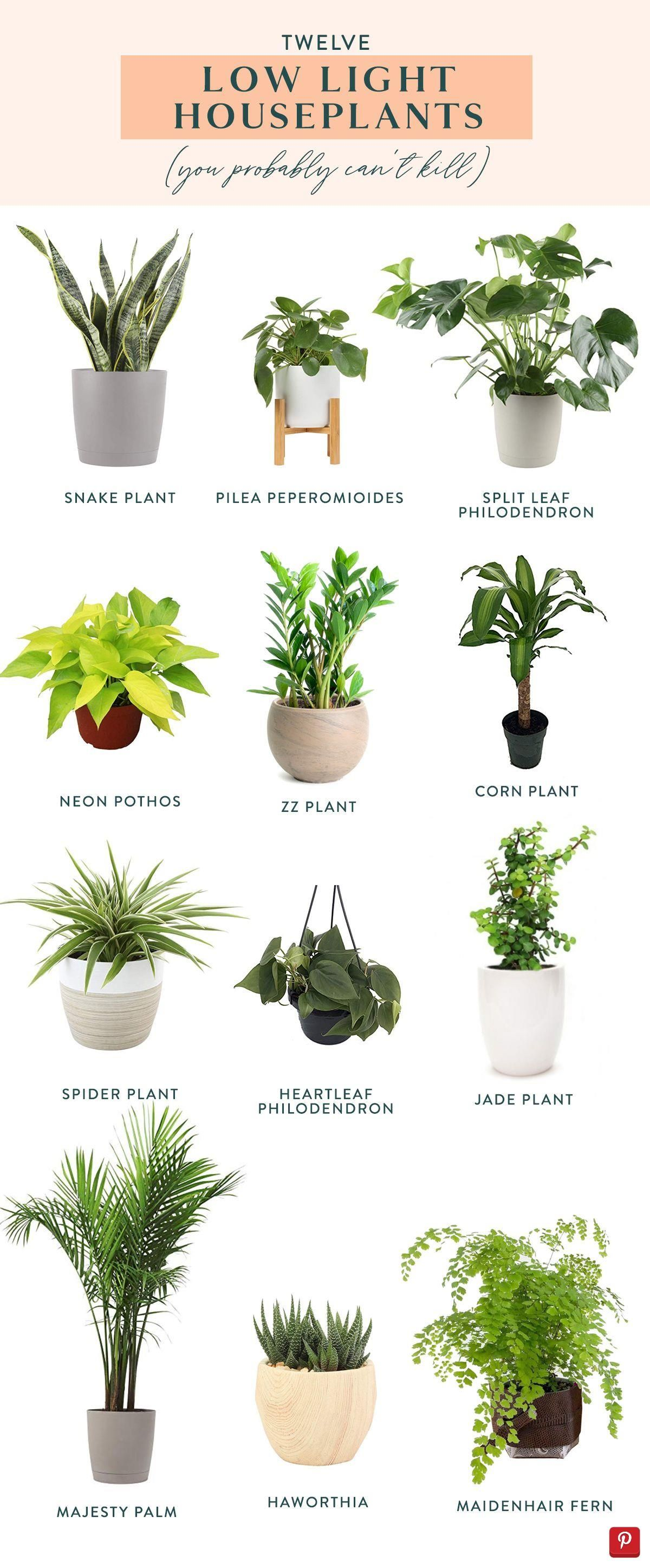 Twelve Low Light Indoor Plants You Probably Can T Kill In 2020 Low Light House Plants Indoor Plants Low Light Plant Decor Indoor