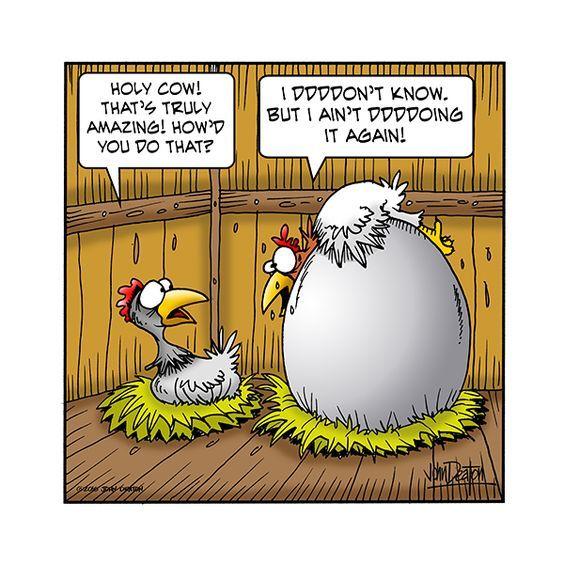 Never Again Chicken Humor Chicken Jokes Funny Toons