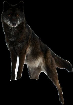 Pin By Dlpng On Wolf Png Black Wolf Wolf Spirit Animal Wolf Spirit