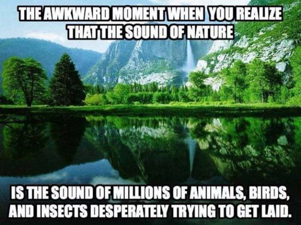 The Sound Of Nature http://ibeebz.com