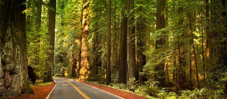 Big basin redwoods state park big basin redwoods state