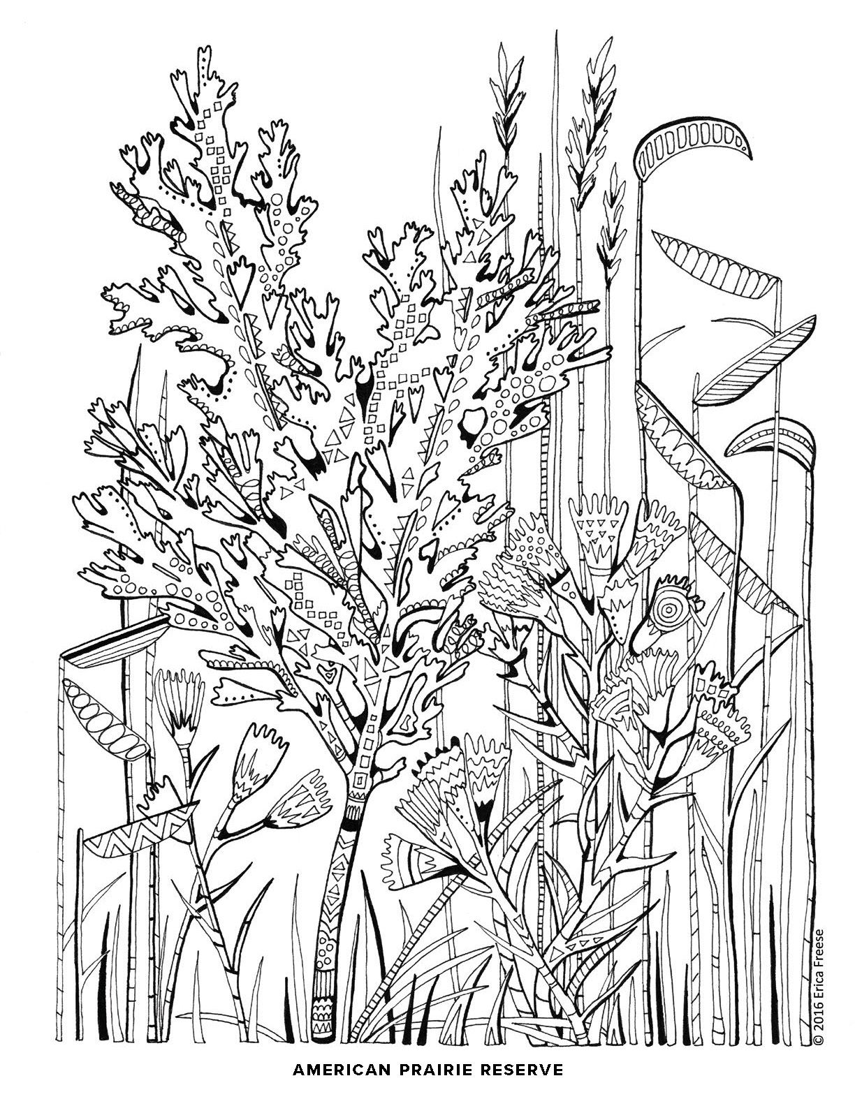 free coloring page from american prairie reserve to download and print at home or school