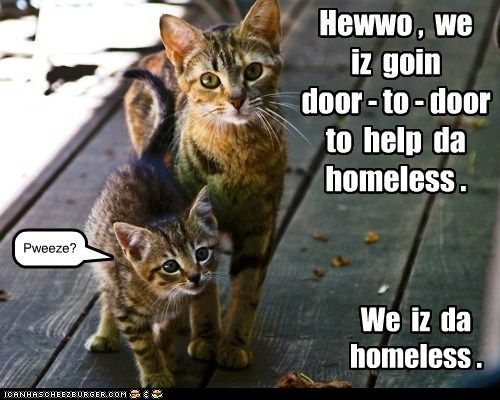 Hewwo Cats Funny Cat Memes Feral Cats