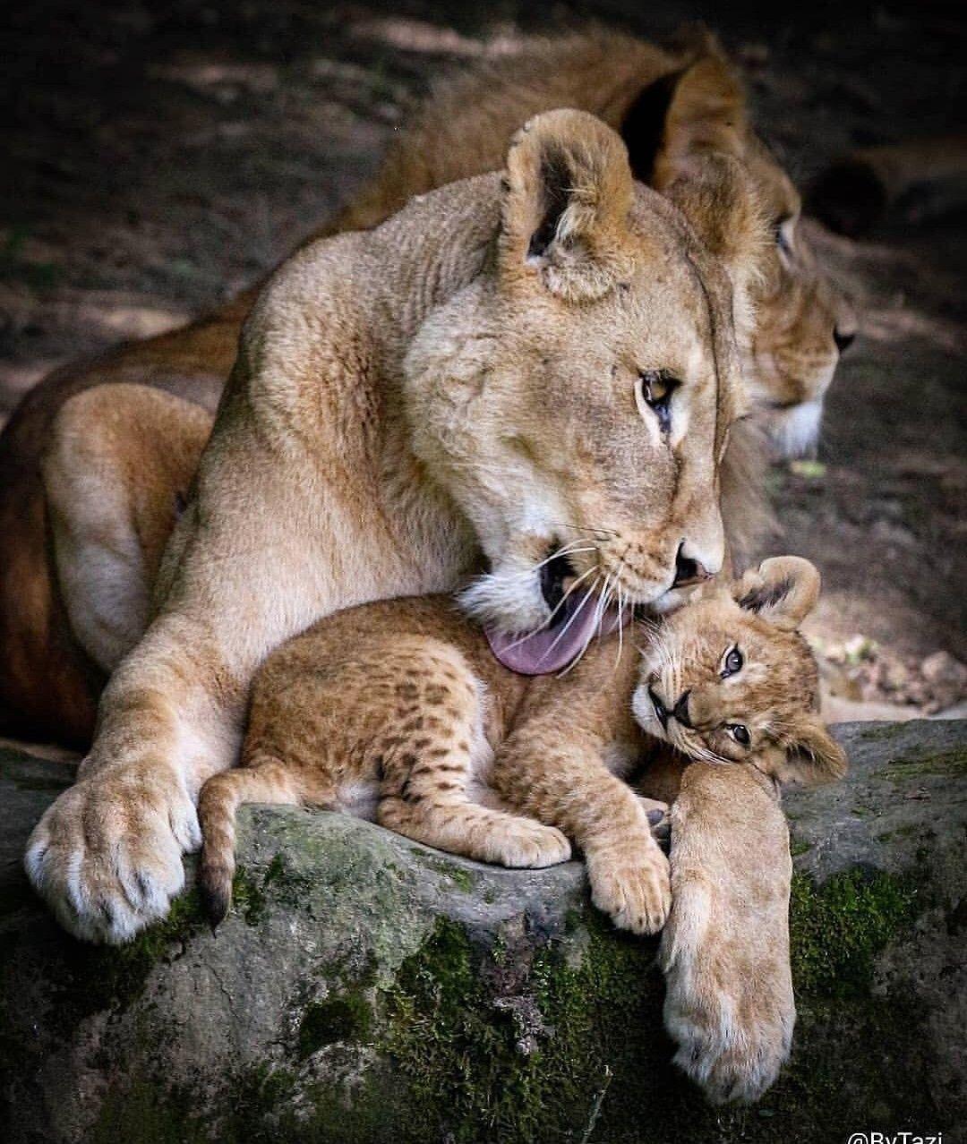 Животные мама и их дети картинки