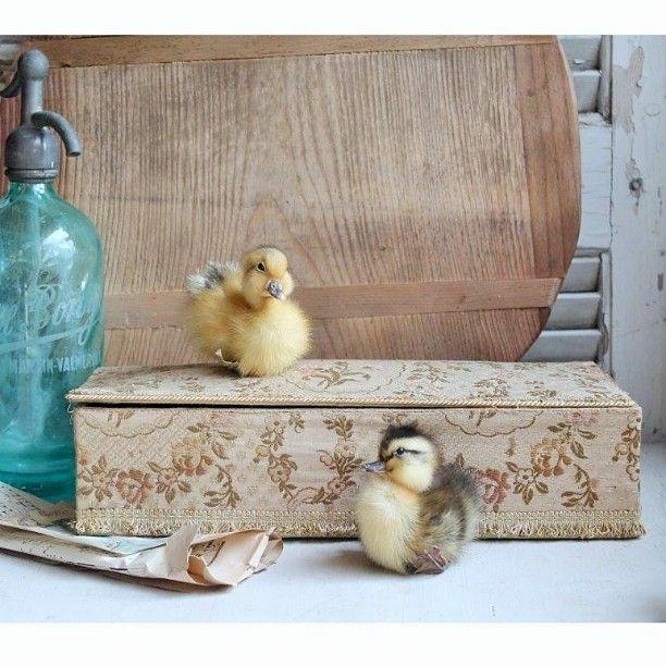 Gammel fransk stofæske.   Old French fabric box.   #froekenanker#brocante#stofæske#fabricbox#interior4you#interiør#indretning#dekoration#ællinger#ducklings by froekenanker