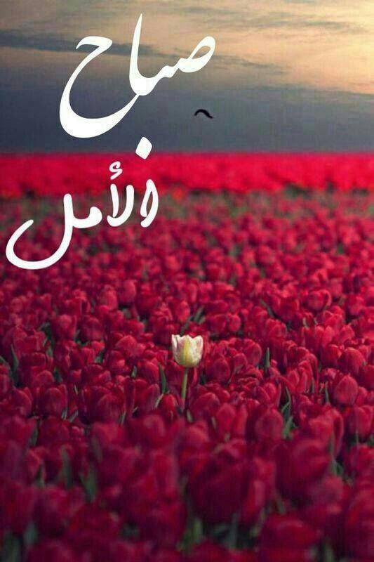 صباح الامل والتفائل بيوم جديد Flower Quotes Good Morning My Love Sweet Words