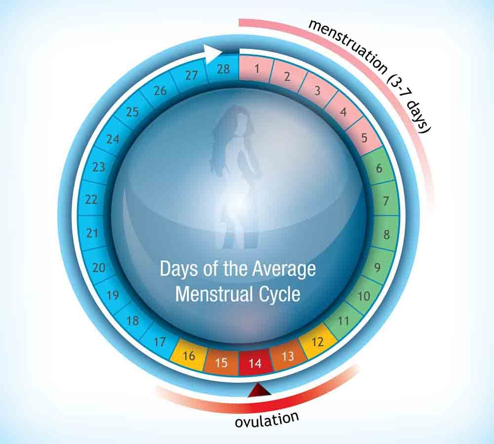Pin on Ovulation