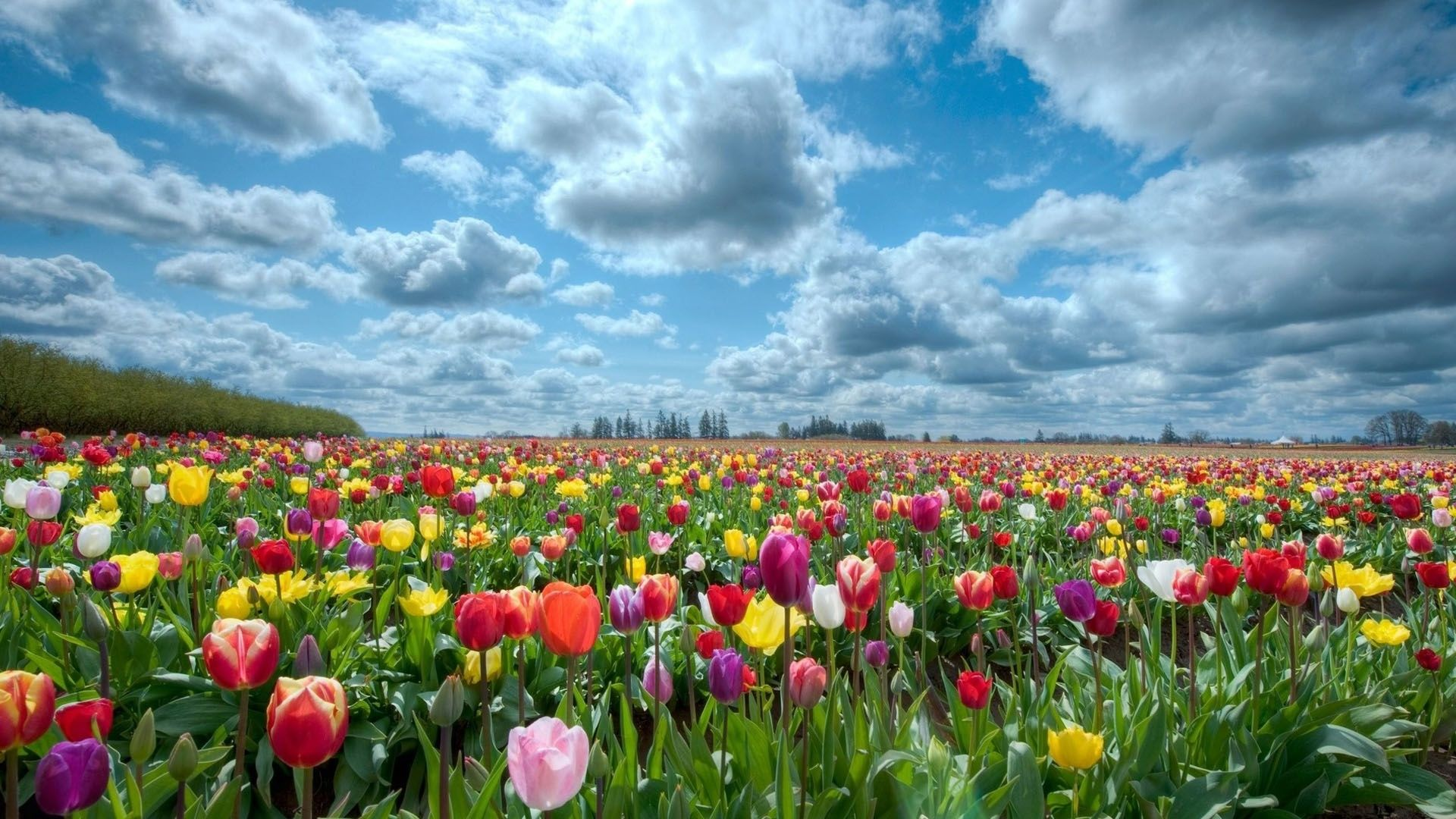 Field of flowers background hd wallpapers field of flowers similar posts field of flowers lavender hd wallpaper field of pink flowers hd wallpaper field of flowers wallpaper colorful nature flowers wallpaper voltagebd Image collections