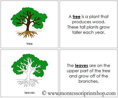Tree Nomenclature Book Ilrates And Describes 5 Parts Of The