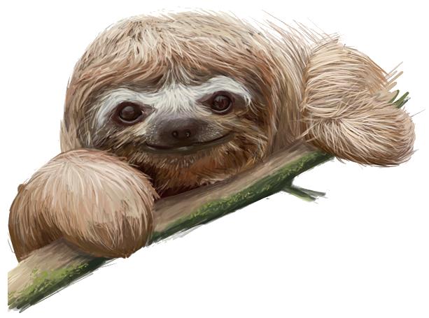 Sloth Face Paint