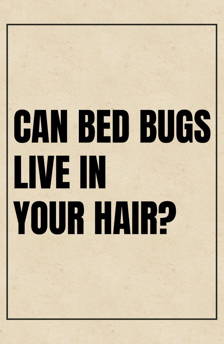 Can Bed Bugs Live In Hair? Bed bugs, Bugs, Bed