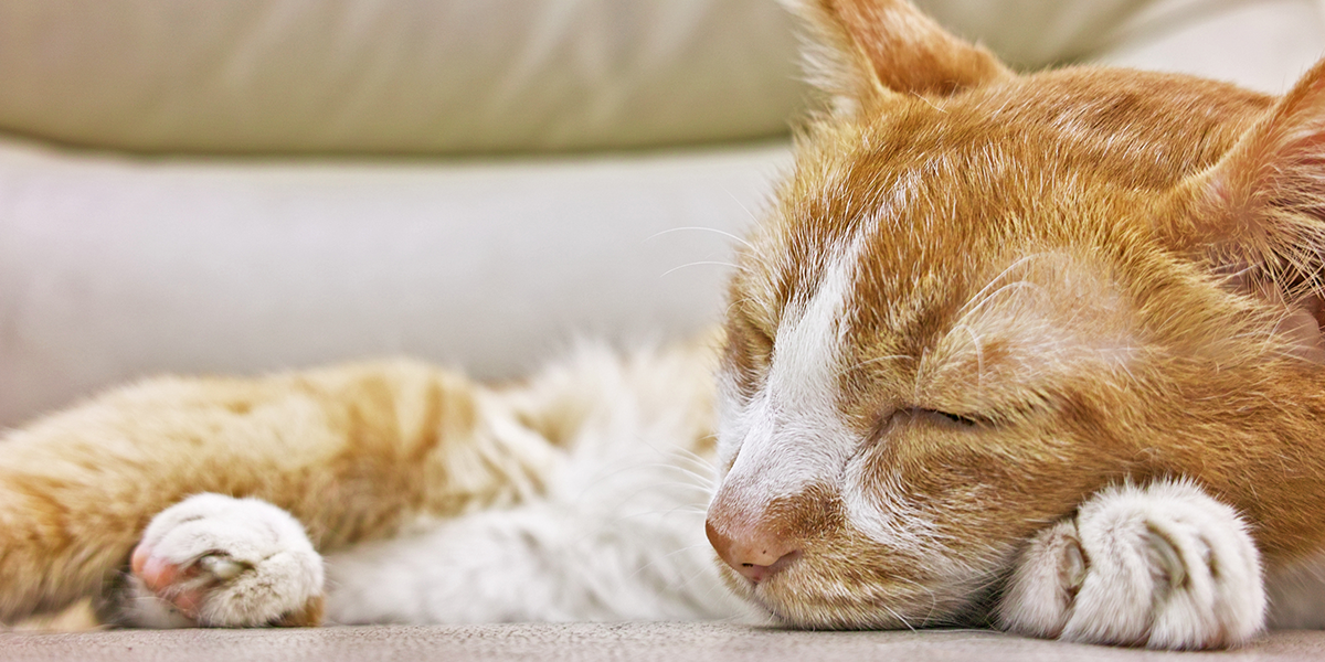 Chronic Kidney Disease International Cat Care in 2020