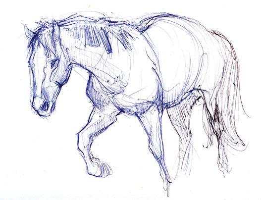Joe weatherly fine art animals en 2019 dibujos de animales anatom a animal et animales - Petit quick coloriage ...