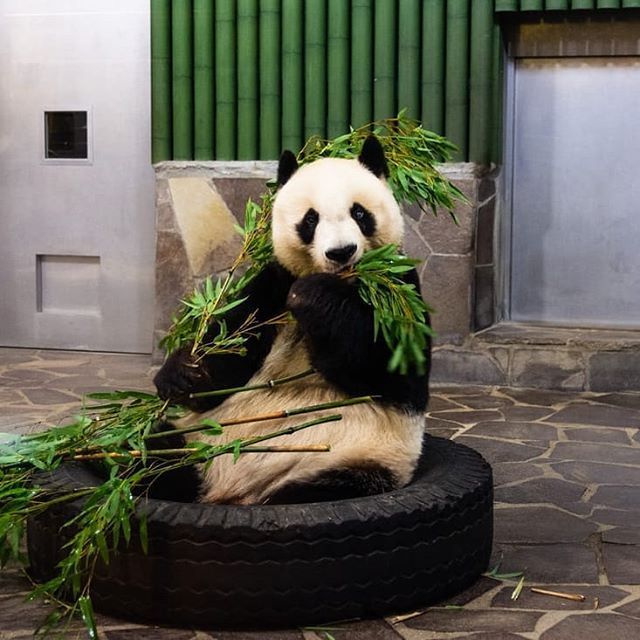 But panda baby gifts if panda baby video its the truth more productive in are usually accustomed to